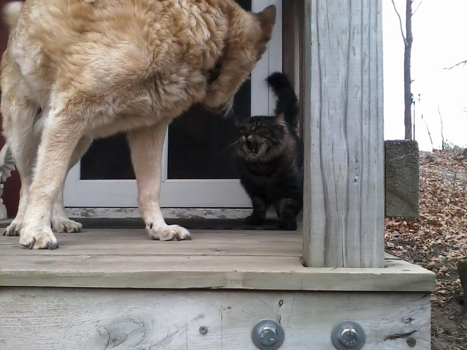 Neighbor Leaves Cat Food Outside
