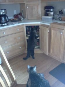 Merlin in pantry for tuna