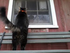 Merlin looking into cabin