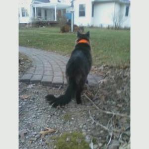 Merlin on path facing house