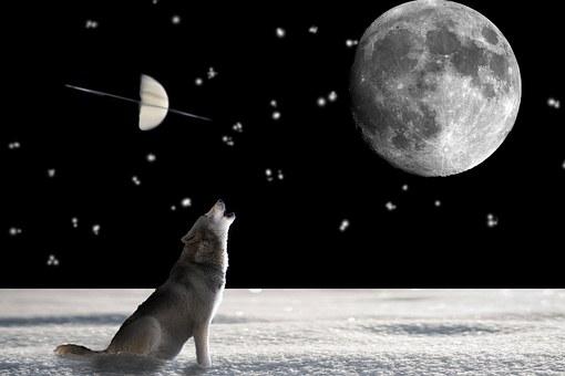 wolf-697736__340[1]